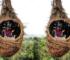 wisata alam di dairi sumut