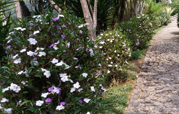 Taman Rhododendron